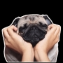 "ملصق تيليجرام ""Pugs"" stickers set"